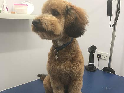 dog grooming lee on the solent